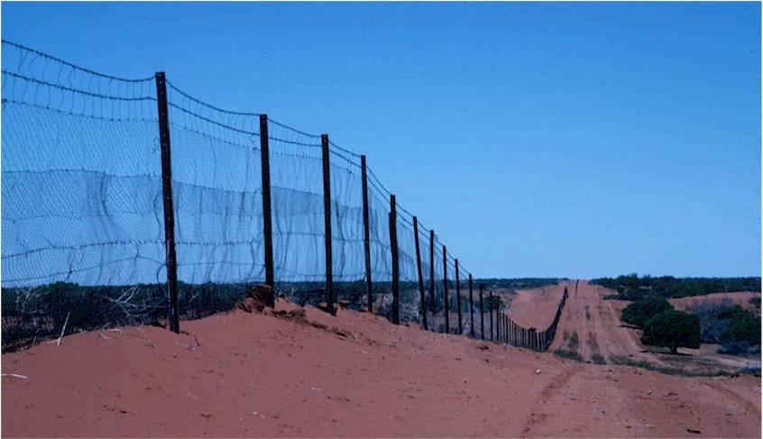 Rabbit Proof Fence Essay