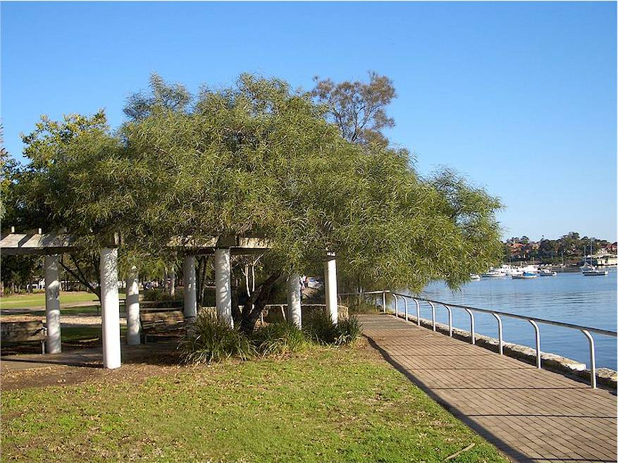 Image of Lilyfield